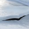 Spaccatura nel ghiaccio