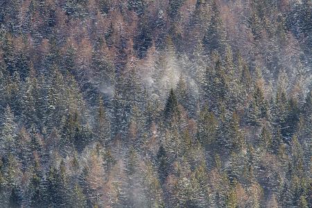 Vento tra gli alberi coperti di neve