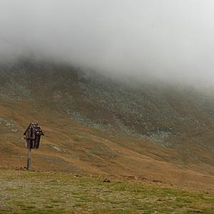 Sito del tortolino nella nebbia